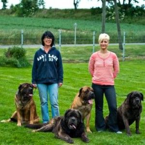 Mastiffs_klein_web